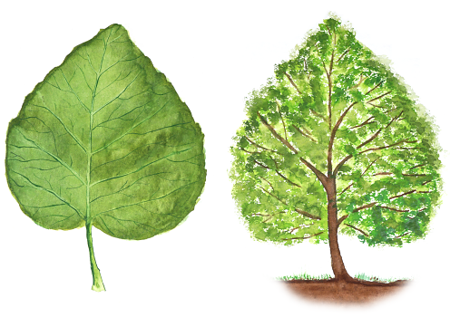 Blatt und Baum